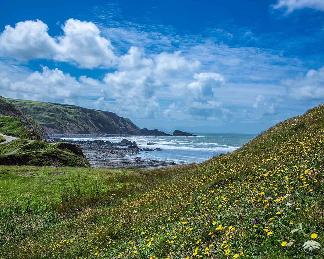 Bude landscape with flowers