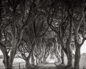 game of Thrones tree-lined avenue